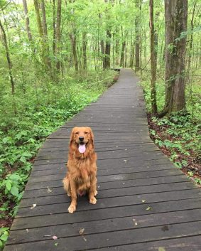 dog on the covered trail of blackland prairie trail on the natchez yrace